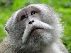 Monkey Forest, Ubud, Bali. Los Primates, Monkey Forest, Ape Monkey, Baboon, Ubud, Trip Advisor, Behavior, Cute Animals, Explore