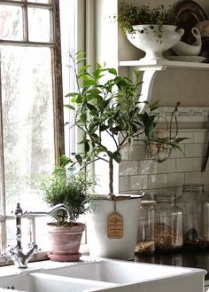 home inspiration: HAPPY HOUSEPLANTS | bellaMUMMA