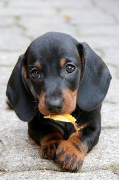 sweet lil' black 'n tan