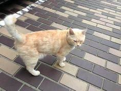he is very friendly.