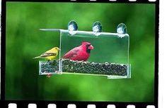 Bird Gifts:Duncraft 74201 Cardinal Classic Window Bird Feeder, 1 Quart
