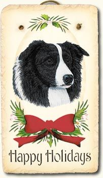 HOLIDAY - BORDER COLLIE