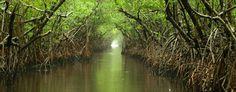 everglades trees | Everglades. Photo: chaunceydavis818, Flickr