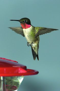 michigan birds | One of the gardeners' favorite birds is fairy green. You mayremember ...