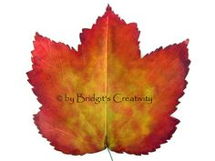 My paper leaves Paper Leaves, Leaf Template, Autumn Leaves, Fall Leaves, Autumn Leaf Color