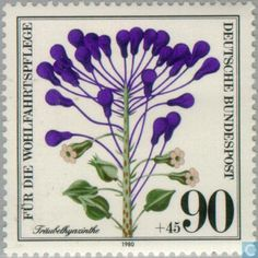 Traubelhyazinthe  (Leopoldia comosa ) Muscari comosum ,Tassel Hyacinth.  Germany, Federal Republic  stamp with plants ,1980.