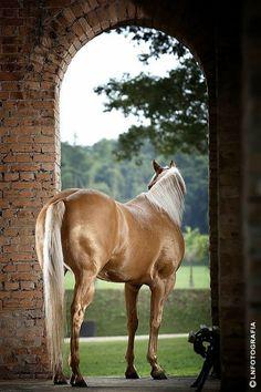 beautiful horse palomino