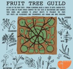 Food Forest Gardens & Plant Guilds in Permaculture Design. Learn how to create plant guilds in your own backyard with permaculture design examples. Learn the 7 layer food forest and how to add…More Permaculture Design, Permaculture Garden, Gardening Zones, Potager Garden, Gardening Courses, Garden Landscaping, Forest Plants, Forest Garden, Garden Art