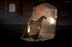 "In the quiet light of the stable, you hear a muffled snort, a stamp of a hoof, a friendly nicker. Gentle eyes inquire ""How are you old friend?"" and suddenly, all your troubles fade away.   ~Author Unknown"