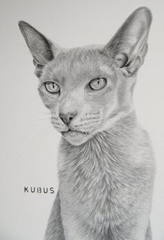 kubus oriental shorthair in graphite by mo62.deviantart.com on @DeviantArt