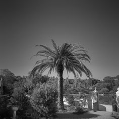 Our #palm tree in the #garden. The Porches Pottery was founded by renowned Irish Artist Patrick Swift in 1968. The architecture of the #building was designed by Swift in the style of a #traditional Algarvian farmhouse. The building is embellished by Swift's #pargeting, #ornamental designs in raised plaster, featuring many of the same motifs seen on our #ceramics today. To find us, please visit www.porchespottery.com
