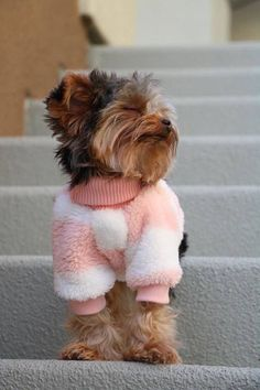 ✔ Cute Dogs And Puppies Yorkshire Terrier Chien Yorkshire Terrier, Yorkshire Terrier Haircut, Yorkies, Yorkie Puppy, Yorky Terrier, Bull Terriers, Yorkie Haircuts, Funny Animals, Cute Animals