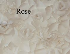 Tradewind Tiaras: How to Make a Paper Flower Backdrop: Part 2, Roses