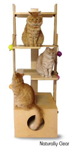 Best Interactive Cat Toy,Kitten Toys for Exercising and Playing,Pack of 3 Cat Toys for Catch Exercise /… /… Nice