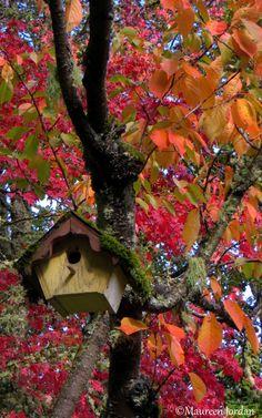 Birdhouse amidst the fall glory