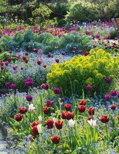 Tulips Abu Hassan, Negrita and Arabian Mystery among forget-me-nots, Euphorbia palustris and cardoons - Gravetye Manor.
