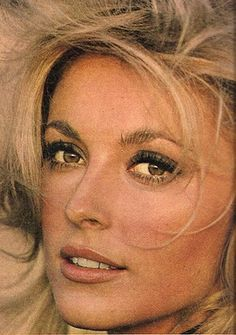 Sharon Tate Hollywood Stars, Classic Hollywood, Old Hollywood, Beautiful Soul, Most Beautiful Women, Beautiful People, Beautiful Person, Classic Beauty, Timeless Beauty