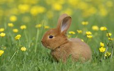 So where exactly does the 'Easter bunny' come from?  - countryliving.co.uk Easter Quiz, Easter Bunny, Easter Eggs, Baby Animals, Fun Facts, Uk Lifestyle, Rabbit, Trivia, Witches