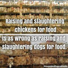 life is better vegan on Why Vegan, Vegan Vegetarian, Reasons To Be Vegan, Vegan Quotes, Factory Farming, Stop Animal Cruelty, Vegan Animals, Animal Welfare, Vegan Lifestyle