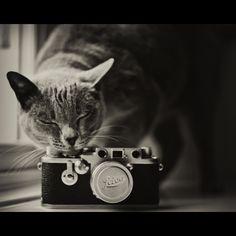 THE LEICA LOVER by solarixx, via Flickr Neko, Cat Camera, Leica Camera, Foto Fantasy, Tier Fotos, Cat Colors, Vintage Cameras, Vintage Cat, Four Legged