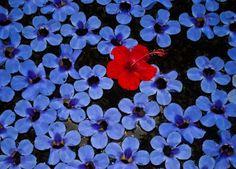 @ auroville, pondicherry Pondicherry, Places To Go, Plants, Red, Photography, Photograph, Fotografie, Photoshoot, Plant