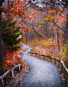 Burr Oaks (Missouri) by Margaret Tompkins cr.c.