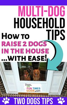 Two Dogs Tips For New Dog Owners - Have two or more dogs already? Or maybe you're thinking of getting another dog -- which would mean living in a multi-dog household for the first time? I've been exactly where you are! I've actually had 2 (or more) dogs living under my roof MORE OFTEN than I've lived with only one dog. These are my best tips for how to raise two dogs in the house -- without all the stress and mess!