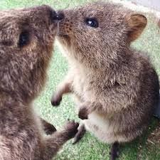 Rare Animals, Happy Animals, Animals And Pets, Funny Animals, Beautiful Creatures, Animals Beautiful, Country Critters, Australia Animals, Panda