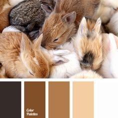 almost black, cinnamon, color selection, cookie color, designer palettes, light…