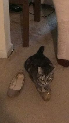 Bella the shoe lover..lol