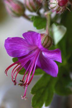 Explore mariluzpicado's photos on Flickr. mariluzpicado has uploaded 1420 photos to Flickr.