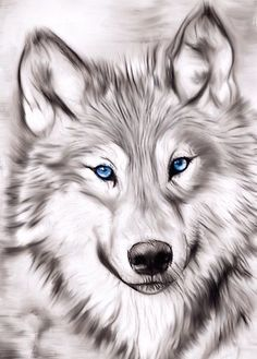 """""""Wolf"""" iPhone Case & Cover by Pencil Art Drawings, Art Drawings Sketches, Realistic Animal Drawings, Cool Wolf Drawings, Awesome Drawings, Horse Drawings, Wolf With Blue Eyes, Wolf Sketch, Wolf Artwork"""