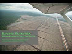Saving Sumatra - palm oil and rainforest destruction - less than 10 Sumatran tigers left & Orangutans on the brink of extinction . Rainforest Destruction, Orangutans, Close To Home, Palm Oil, Our Planet, Go Green, Natural Disasters, Mother Earth, Exhibit