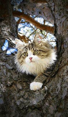 =^. .^= Cat Gif =^. .^=