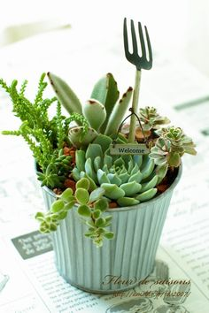 So cute with the mini pitchfork! Succulent Pots, Dish Garden, Small Succulents, Succulent Terrarium, Succulent Gardening, Succulent Gifts, Cactus Plants, Succulents, Planting Flowers