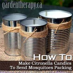 How to Make Citronella Candles To Send Mosquitoes Packing