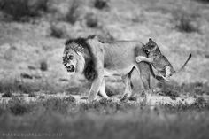 Your comprehensive travel guide to Namibia Travel Magazines, Hunting, Lion, Horses, Photography, Animals, Google, Leo, Photograph