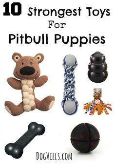10 Strongest Toys For Pitbull Puppies: Does your pitty keep destroying all his toys within minutes? You need better toys! Check out these 10 strongest toys for pitbull puppies! No guarantees that they'll last forever, but at least they'll slow him down! Rottweiler Puppies, Toy Puppies, Dogs And Puppies, Doggies, Poodle Puppies, Husky Puppy, Terrier Dogs, Pitbull Terrier, Pitbull Pups