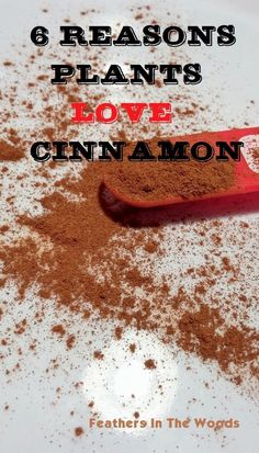 Use cinnamon in your garden as a fungicide, to prevent dampening off disease in your seedlings, and more!   Feathers in the Woods