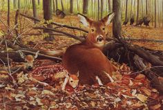 whitetail and fawns