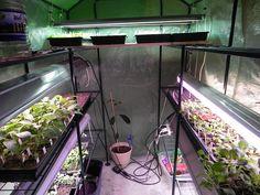 42 Best Basement Greenhouse Images In 2020 Indoor Garden 400 x 300
