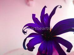 Vivid Purple Flower, a perfect piece of art for anywhere in life. Purple Flower Photos, Purple Flowers, Top Artists, Art Pieces, Plants, Life, Beautiful, Artworks, Art Work