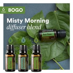 Diffusing oils is great as a powerful support to our mental health.   Our diffuser blends today include the essential oils from doTERRA's BOGO special today   Buy Tea Tree 15 mL, get Citronella 15 mL Free! Essential Oil Diffuser Blends, Essential Oil Uses, Doterra Essential Oils, Melaleuca, Citronella, Buy Tea, Tea Tree, Mental Health, Skincare