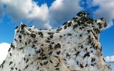 Spiders. Lots of spiders.   37 Pictures That Prove Australia Is The Craziest