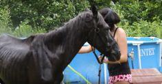 Dit oude paard werd achtergelaten om te sterven, maar gelukkig werd ze gevonden! - http://filmpjevandedag.nl/mishandeld-paard-krijg-waardig-einde/