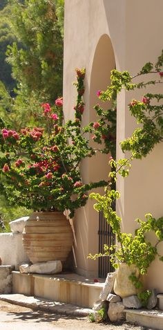 """Love the huge ceramic planters with single planting mother always said """"the doorway to your house reflects who you are"""" someone beautiful must live here #kefalonia"""