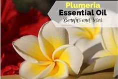 Plumeria Essential Oil Benefits and Uses include being great for hair and skin, soothing headaches, muscular pain, it has an enjoyable sweet, floral scent.