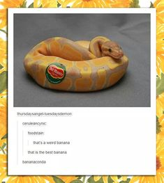 FunSubstance - Funny pics, memes and trending stories - bananaconda. 😂 Best Picture For trends 2020 For Your Taste You are looki - Les Reptiles, Cute Reptiles, Reptiles And Amphibians, Cute Funny Animals, Funny Cute, Hilarious, Funniest Animals, Animals And Pets, Baby Animals