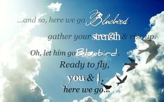 Sara Barielles ~ And so here we go bluebird / Back to the sky on your own / Oh, let him go bluebird / Ready to fly / You and I / Here we go. Lyric Quotes, Funny Quotes, June Cleaver, Sara Bareilles, Uplifting Words, Music Things, Letting Go Of Him, Bluebirds, Dubstep