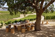 Vineyard Safari Picnic table | Flickr - Photo Sharing! Outdoor Furniture Sets, Outdoor Decor, Picnic Table, Firewood, Safari, Vineyard, Plants, Collage, Food